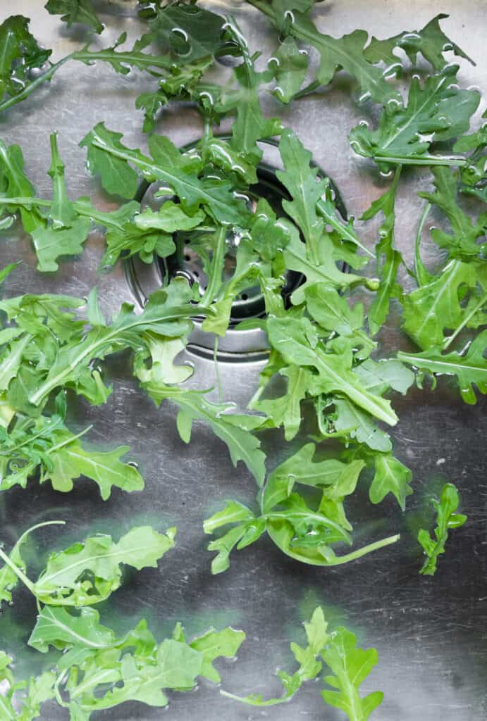 arugula in sink of water